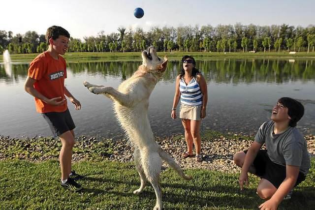 Perro jugando con sus dueños en el parque