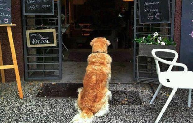Perro a las puertas de la cafetería