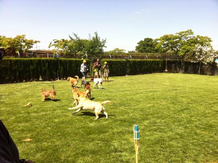 Circuito agility, residencia, cursos, piscina canina